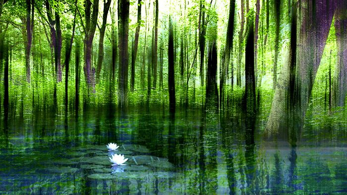 mindfulness forest